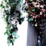 植物 ワークショップ(手作り体験) 名古屋