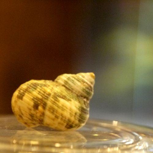 貝殻 ボーダー