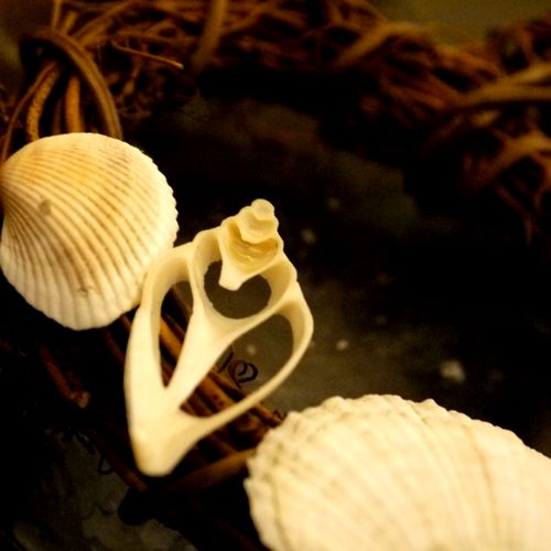 貝殻リース