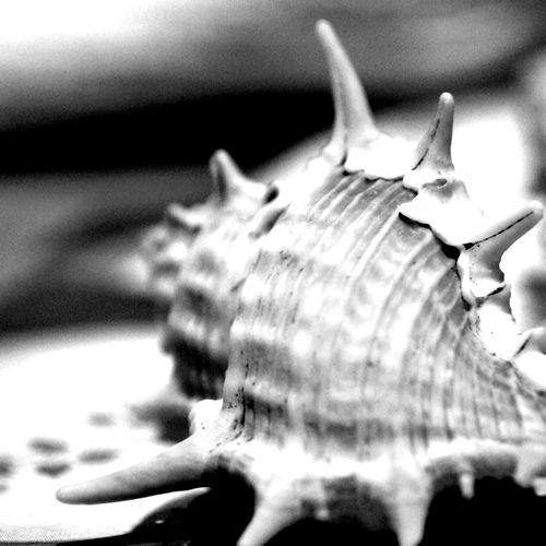 格好良い貝殻の写真