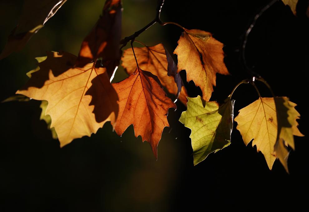 秋 枯れ葉