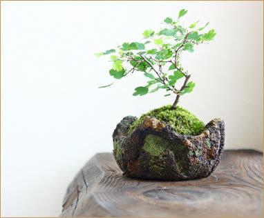 山のような盆栽