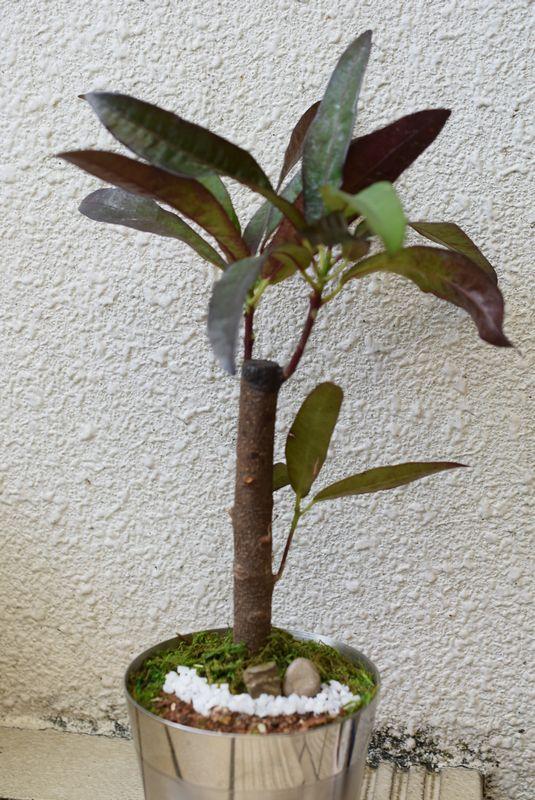 名古屋 盆栽 ワークショップ