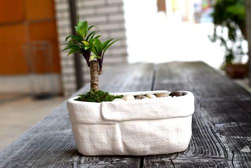 気軽な盆栽体験