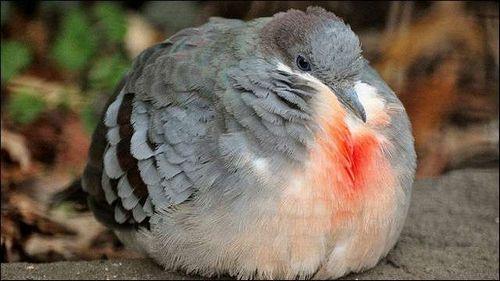 モフモフ 鳥