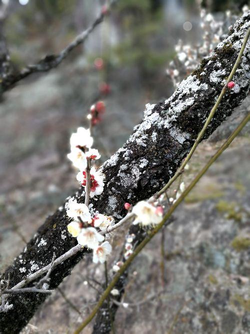 名古屋からアクセスの良い梅の名所