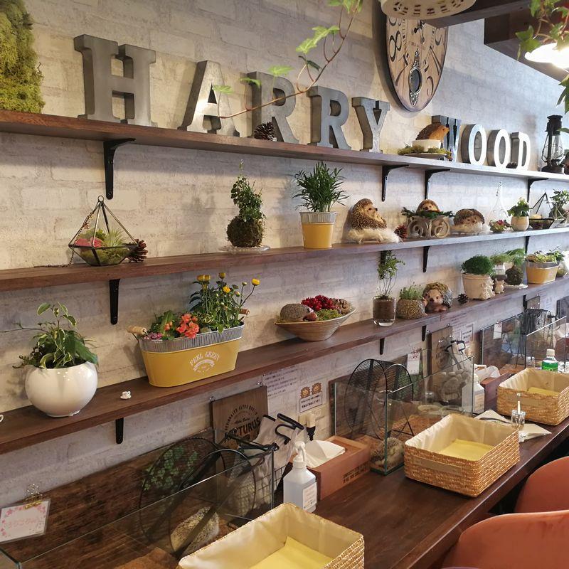 ハリネズミカフェ Harry Wood